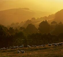 Golden Light - Mt Best Gippsland by Hans Kawitzki