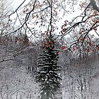 holiday snow by Tgarlick