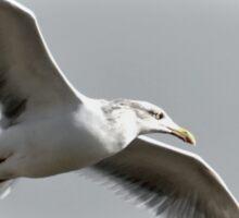 Soaring Gull ............... Sticker