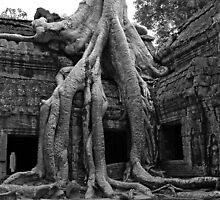 Ta Prohm  by Stephen Colquitt