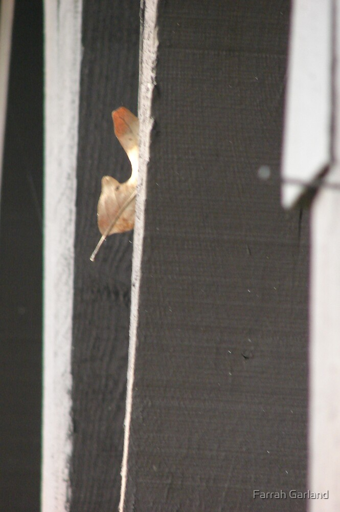 Another leaf in the wall by Farrah Garland