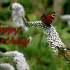 butterfly birthday card by cherryannette
