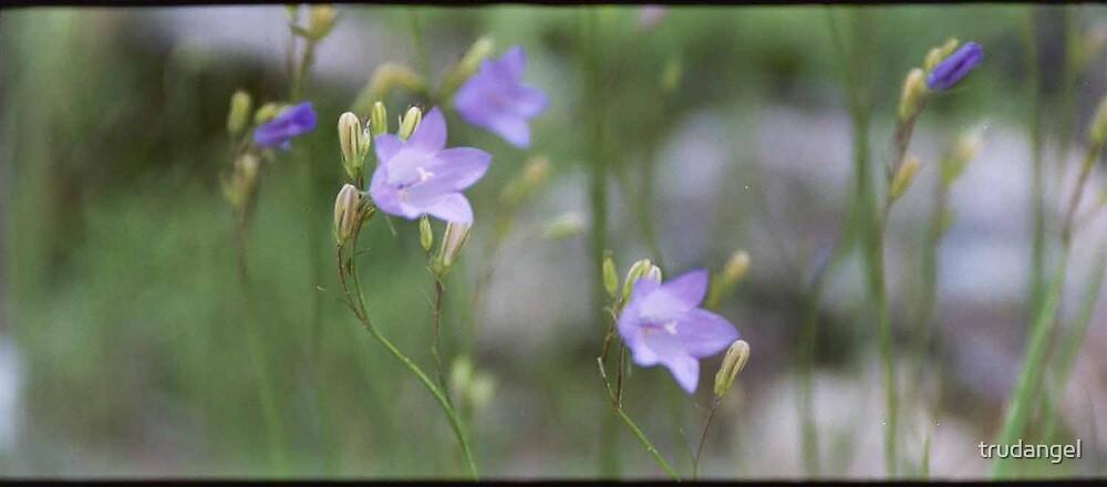 Lavender by trudangel