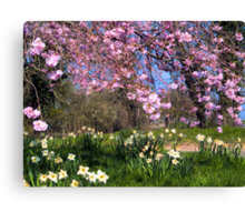 Spring Lane in Blossom Canvas Print