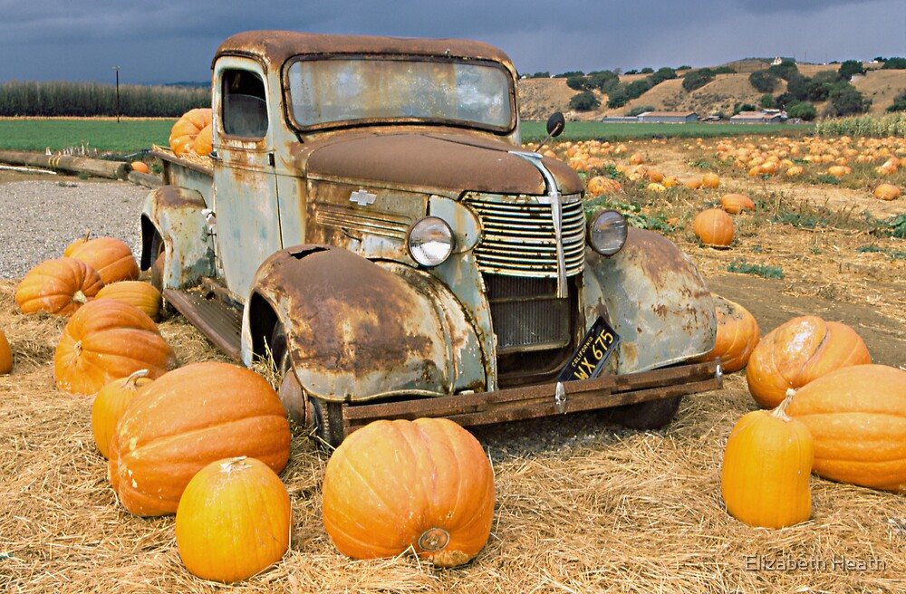 Chevy truck pumpkin patch by Elizabeth Heath