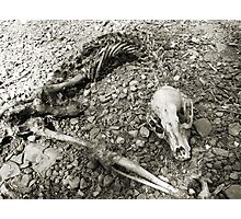 #99    Skeletal Remains Photographic Print