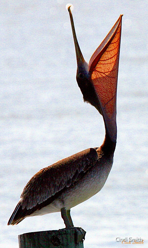 PELICAN VEINS by Cindi Smith