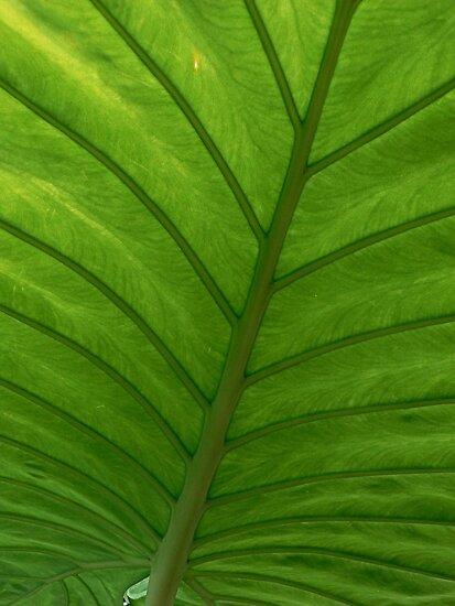 #100  Green Leaf Macro by MyInnereyeMike