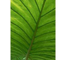#100  Green Leaf Macro Photographic Print
