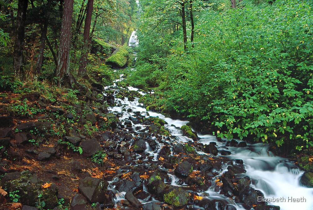 Columbia Gorge waterfall by Elizabeth Heath