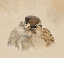 House Sparrow by Bamalam Art and Photography