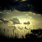 End of Day by nancz