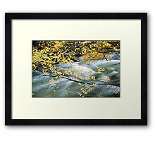Water through leaves Framed Print
