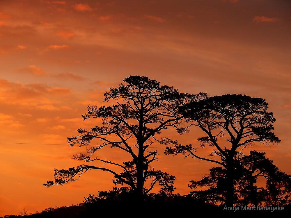The Evening by Anuja Manchanayake