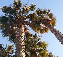 Under the Palms by nicrene