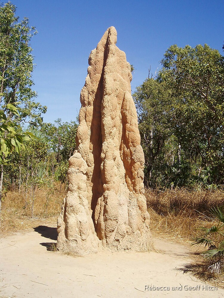 termites by Rebecca and Geoff Hitch