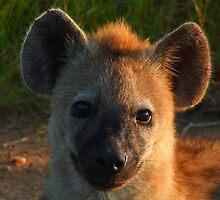 Hyena cub by Mark Lindsay