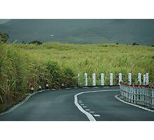 Sugar Cane Labrinth Photographic Print