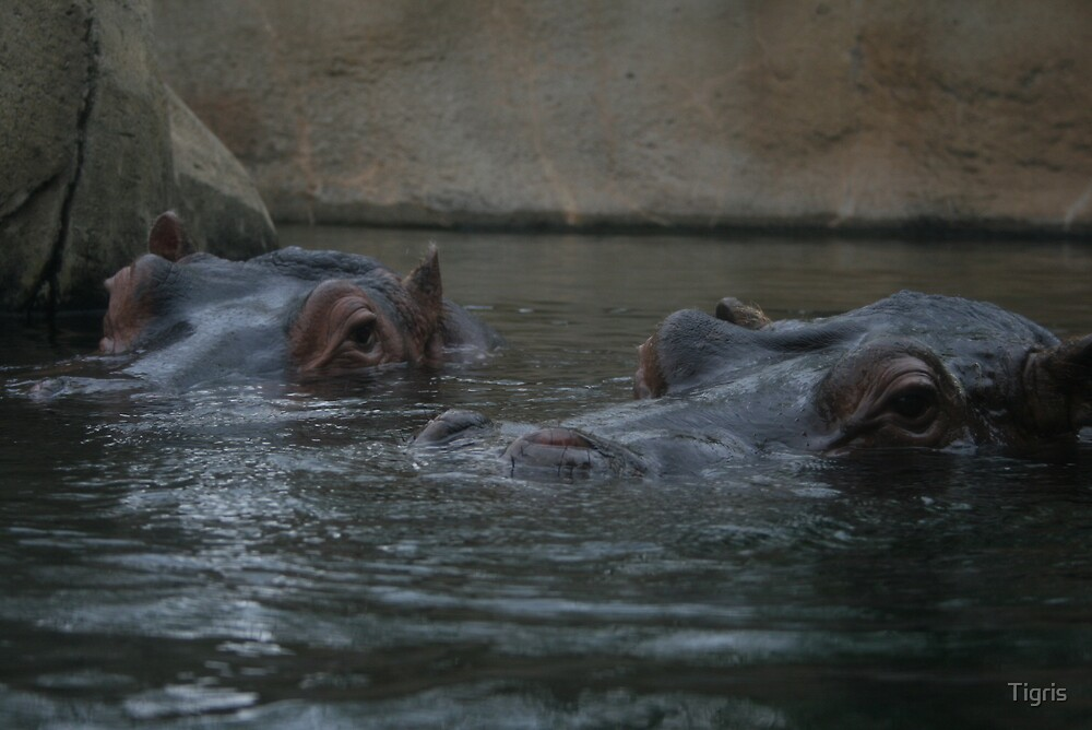 bath time by Tigris