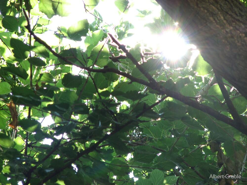 Sunlight 1 by Albert Grable