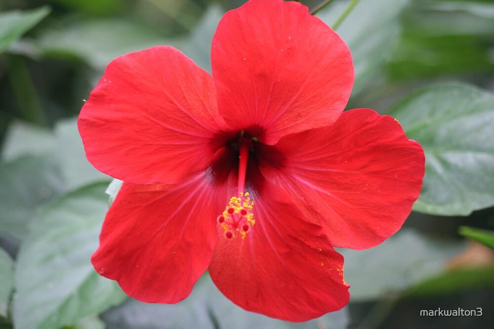 flowers by markwalton3