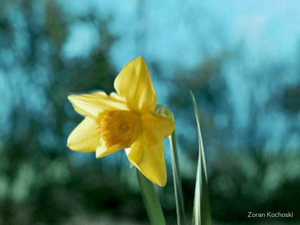 The flower_2 by Zoran Kochoski