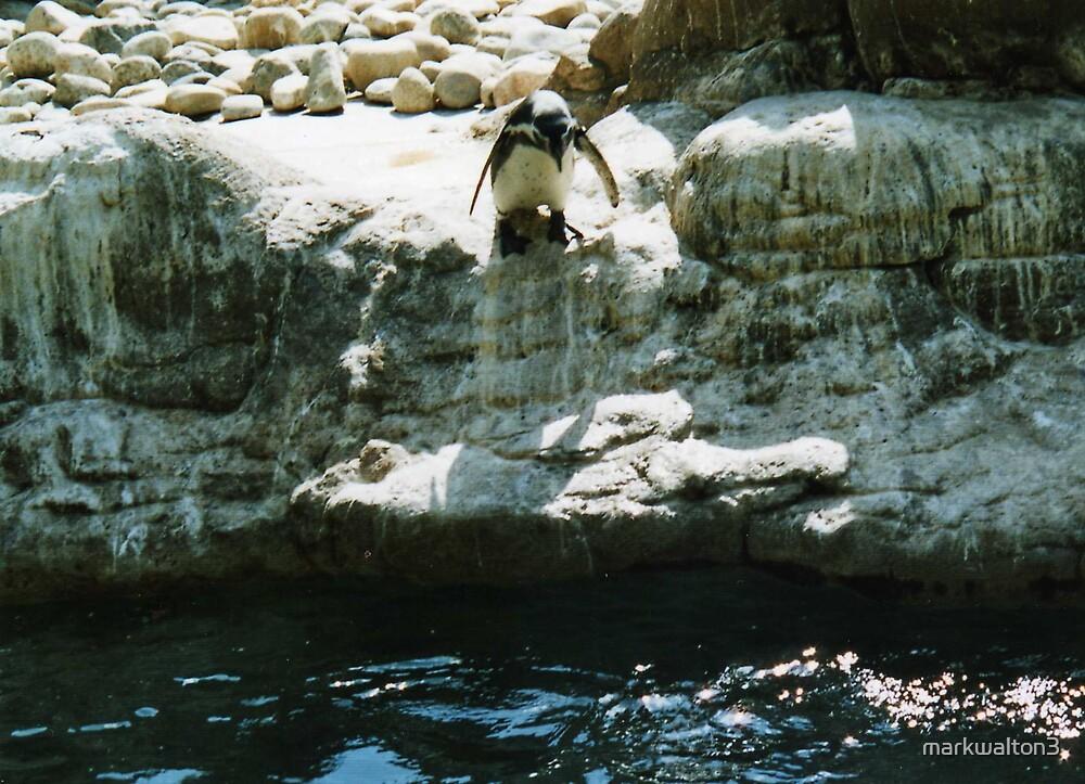 penguin diving by markwalton3