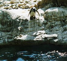 penguin diving by markwalton3