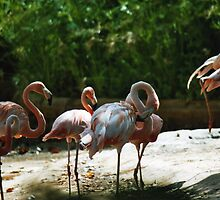 flamingos by markwalton3