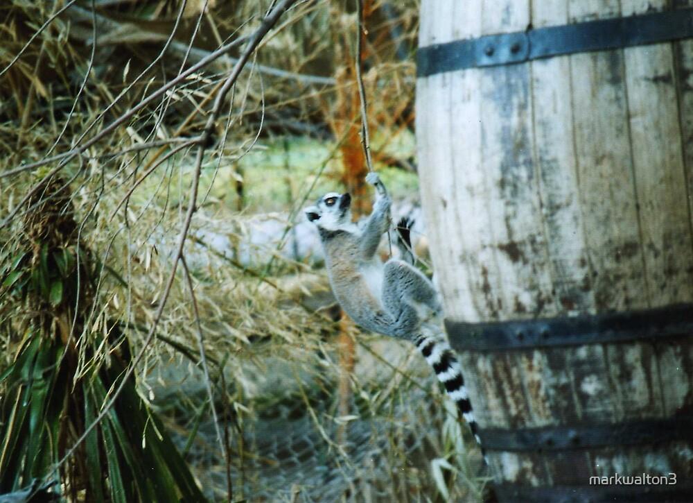 lemur climbing by markwalton3