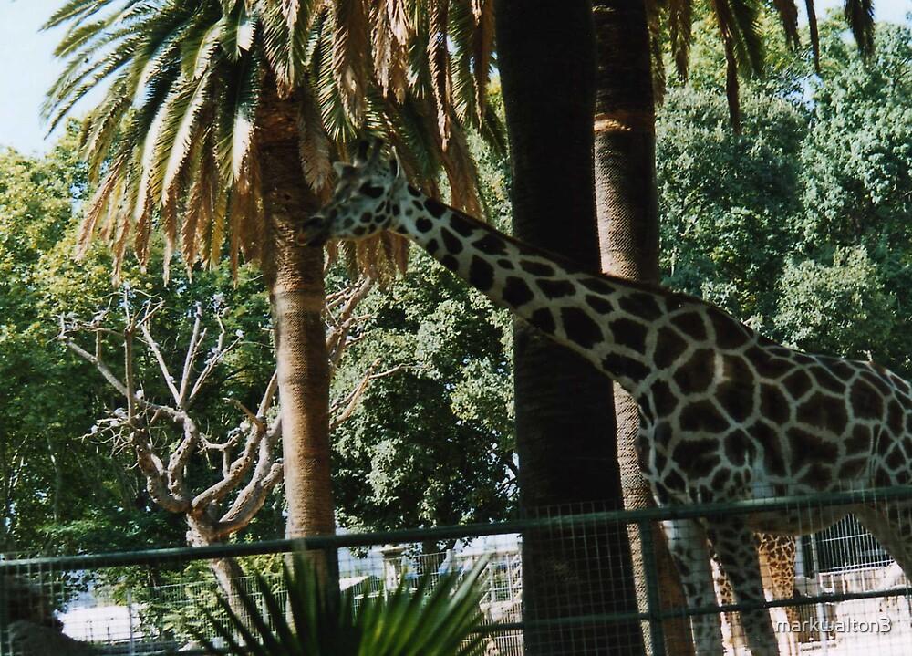 giraffe by markwalton3