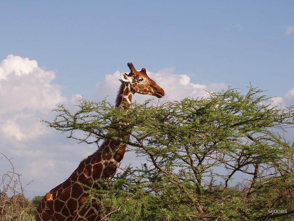 giraffe at lunch by sijones