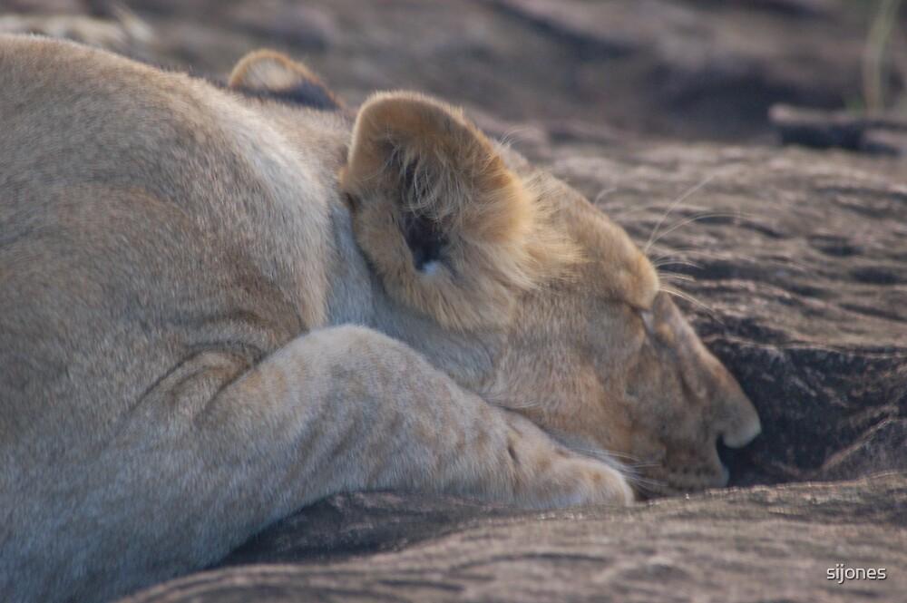 lion profile by sijones