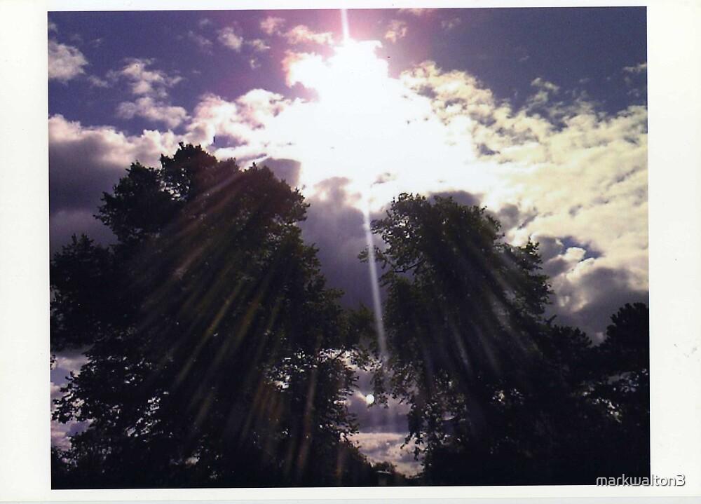 Sun through the trees by markwalton3