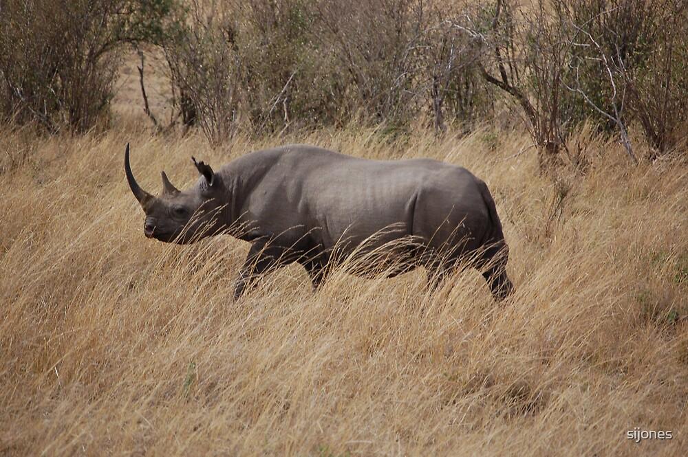 black rhino masai-mara,kenya by sijones