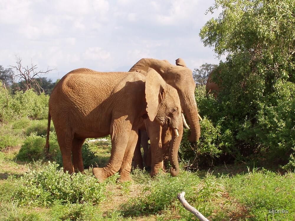 elephants samburu kenya by sijones