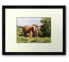elephants samburu kenya Framed Print