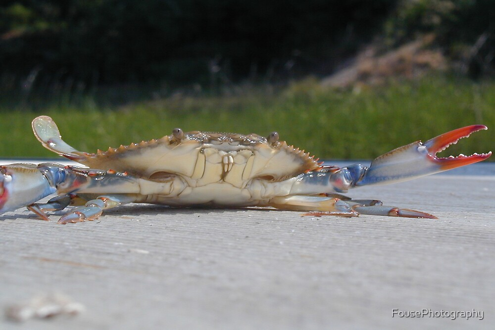 Blue Crab by FousePhotography