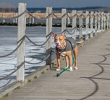 Shelby at the Boardwalk by Thomas Young
