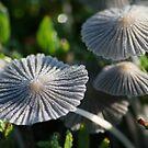 Morning mushrooms by Leo Brown