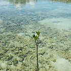 Mangrove New Growth by skurm002