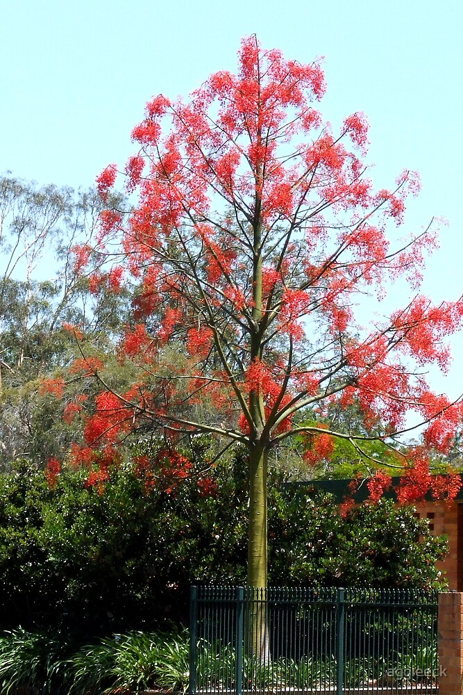 flame tree by aggieeck