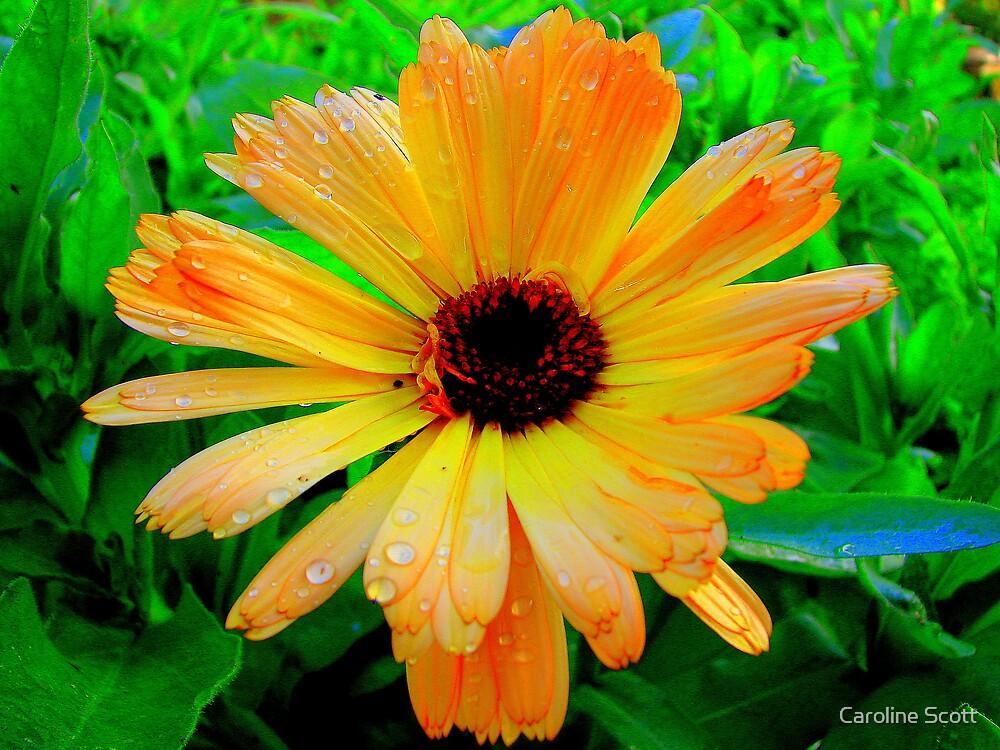 Blooming flower 3 by Caroline Scott