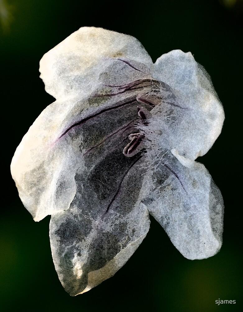 Paper Flower by sjames