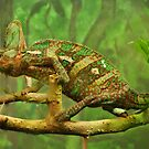 Karma Chameleon by LlandellaCauser