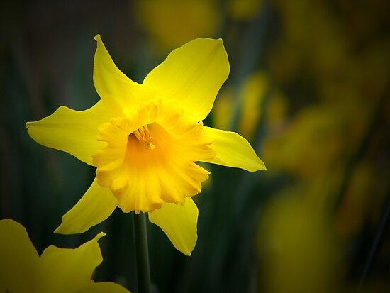 Springtime by Paul Fleming