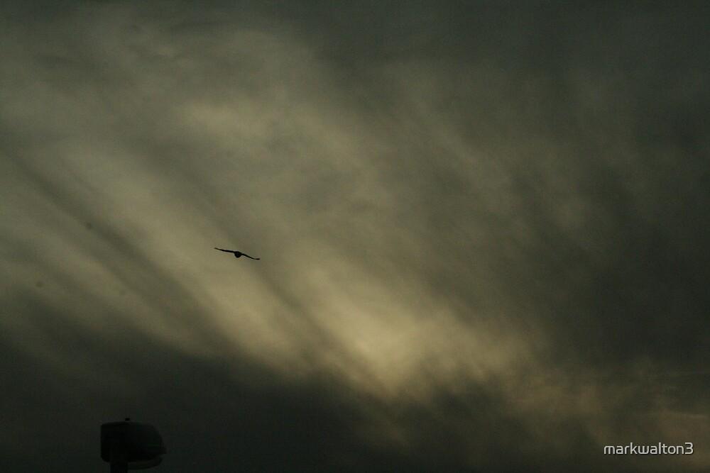 night sky by markwalton3