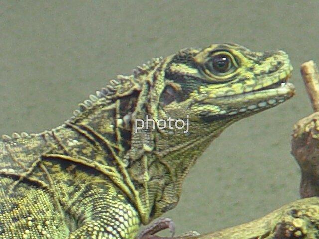 photoj lizard by photoj