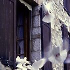 Doves in St Paul by BruceW