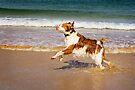 Beach Brittany by Helen Green